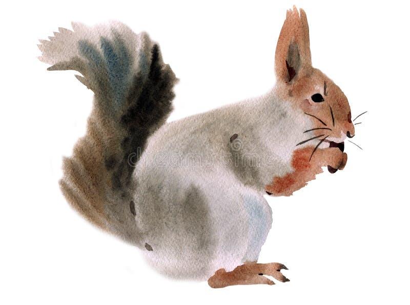 Illustration d'aquarelle d'un écureuil illustration libre de droits