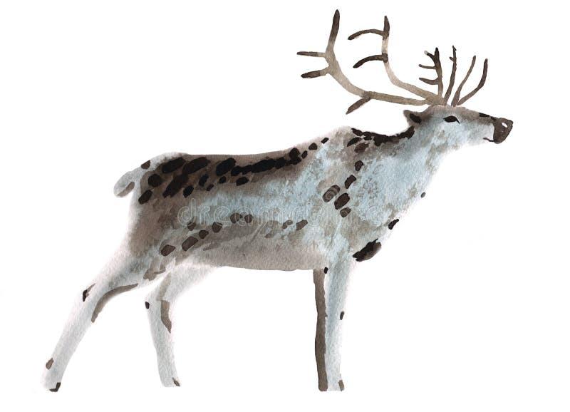 Illustration d'aquarelle d'un cerf commun illustration de vecteur