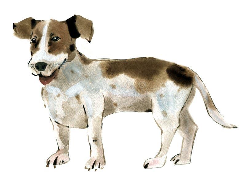 Illustration d'aquarelle d'un chien Jack Russell Terrier à l'arrière-plan blanc illustration stock