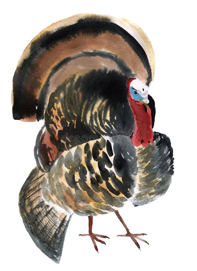 Illustration d'aquarelle d'un dindon d'oiseau illustration libre de droits