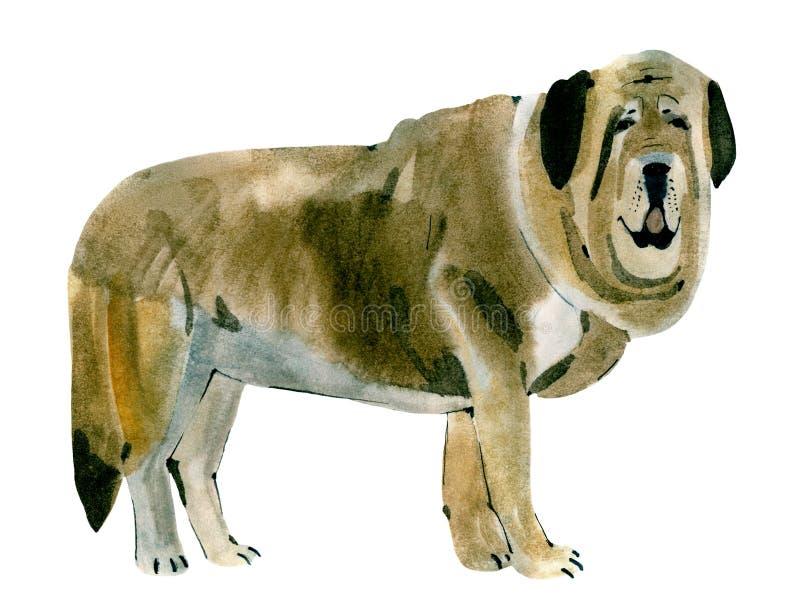 Illustration d'aquarelle d'un mastiff espagnol de chien à l'arrière-plan blanc illustration de vecteur