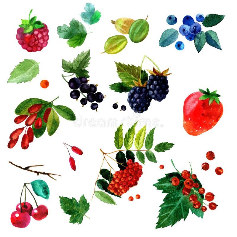 Illustration d'aquarelle d'une image différente de baies d'ensemble nuances transparentes Labels, fond, carte, modèle illustration stock