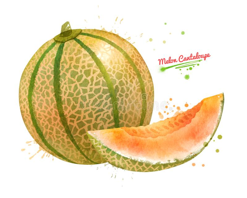 Illustration d'aquarelle de cantaloup de melon illustration libre de droits