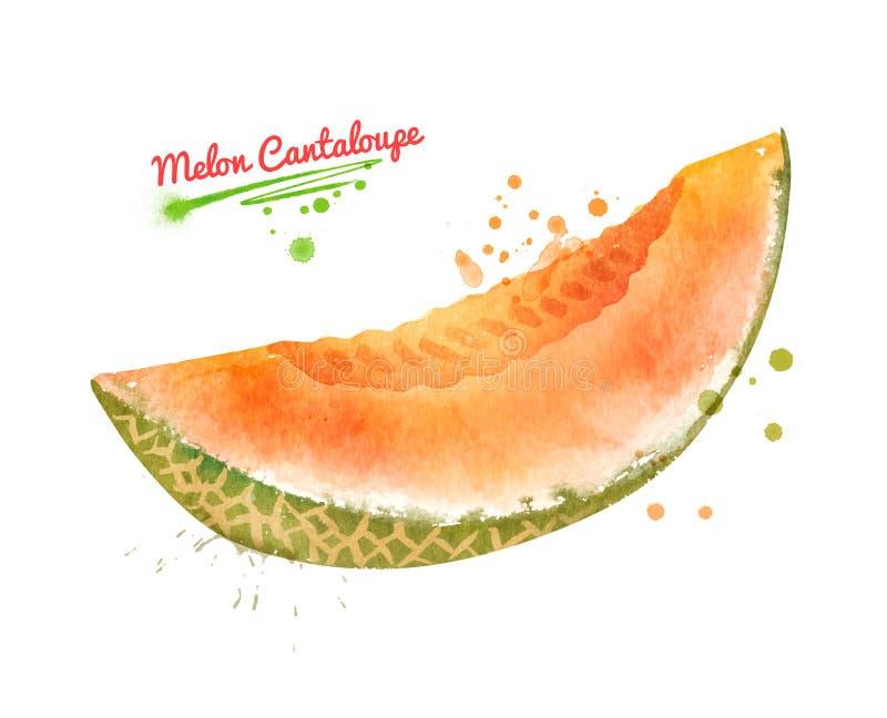 Illustration d'aquarelle de cantaloup de melon illustration stock