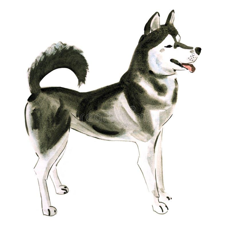 Illustration d'aquarelle de chien de traîneau de chien à l'arrière-plan blanc illustration stock