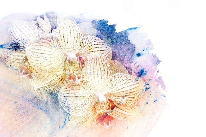 Download Illustration D'aquarelle De Fleur Illustration Stock - Illustration du botanique, décoration: 56476112