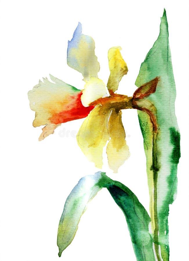 Illustration d'aquarelle de fleur de narcisse illustration libre de droits