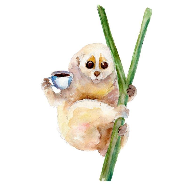 Illustration d'aquarelle de Lori lent avec la tasse de café, isolat illustration de vecteur
