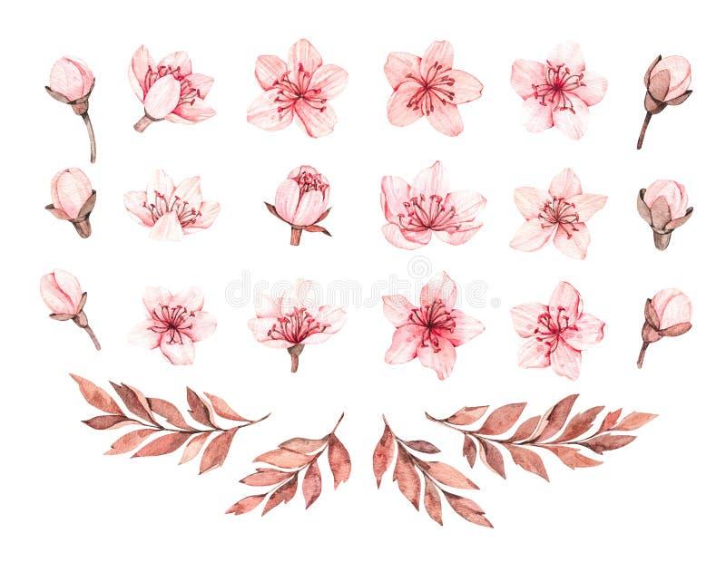 Illustration d'aquarelle de ressort Fleur de Sakura Cerise Fleurs et branches roses botaniques Éléments floraux de fleur Perfecti image stock
