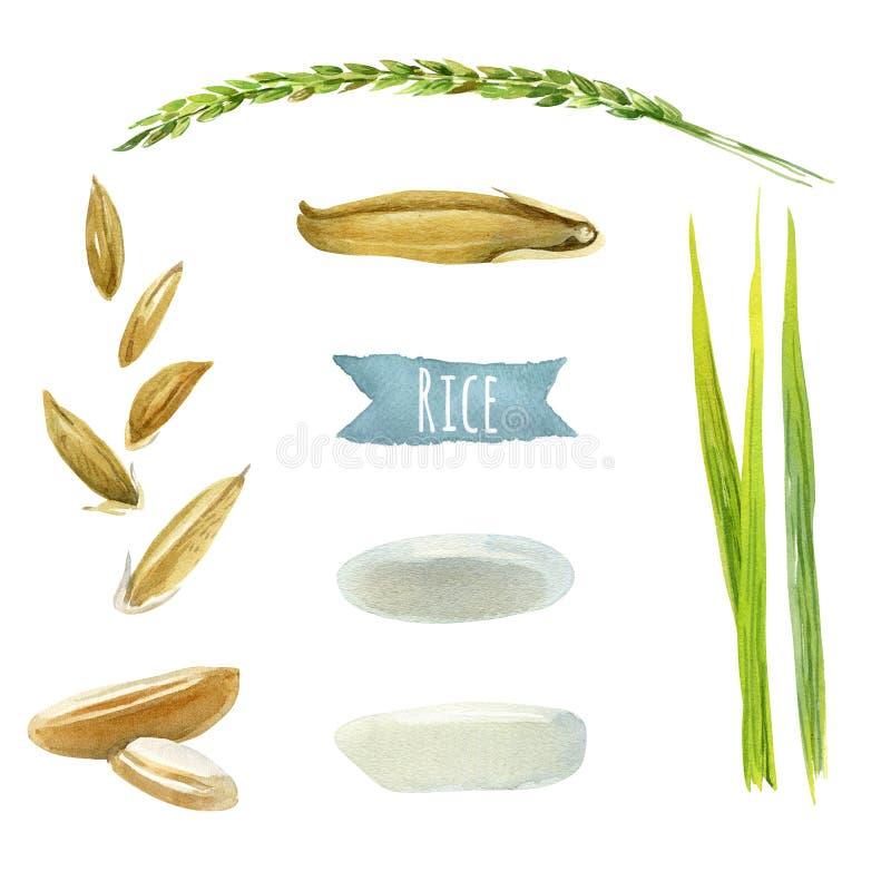 Illustration d'aquarelle de riz avec des chemins de coupure illustration stock