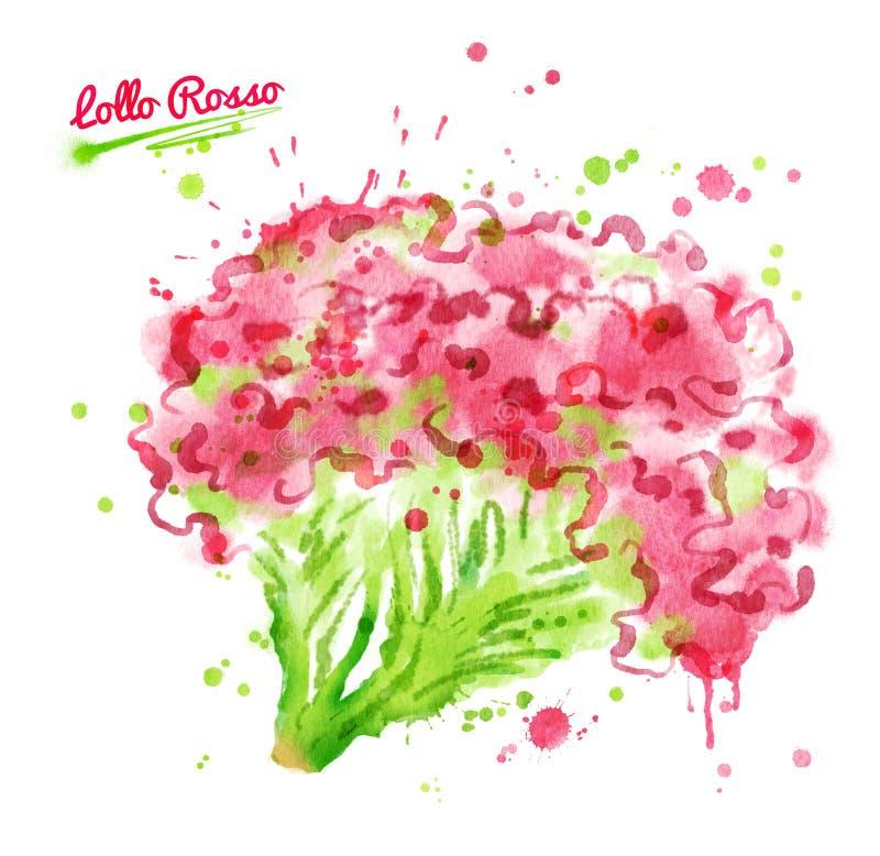 Illustration d'aquarelle de salade de rosso de lollo illustration de vecteur