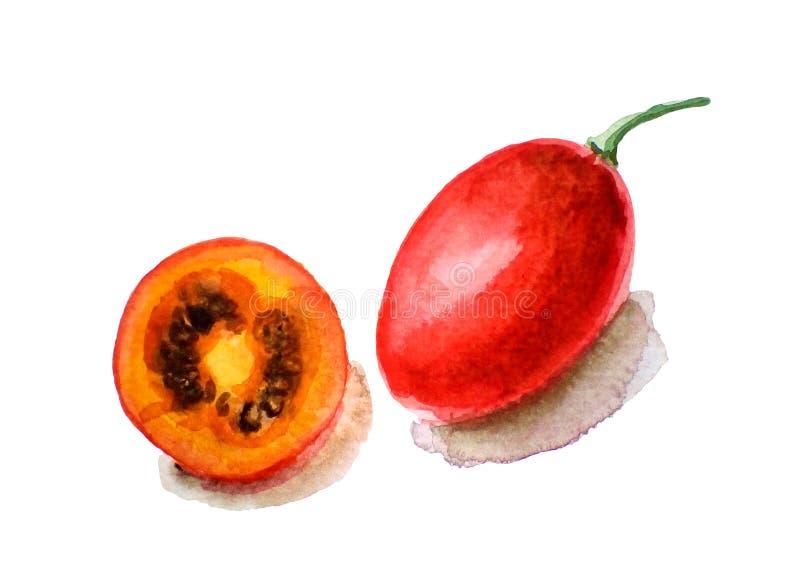 Illustration d'aquarelle de tamarillo tropical de fruit, d'isolement sur le blanc illustration de vecteur