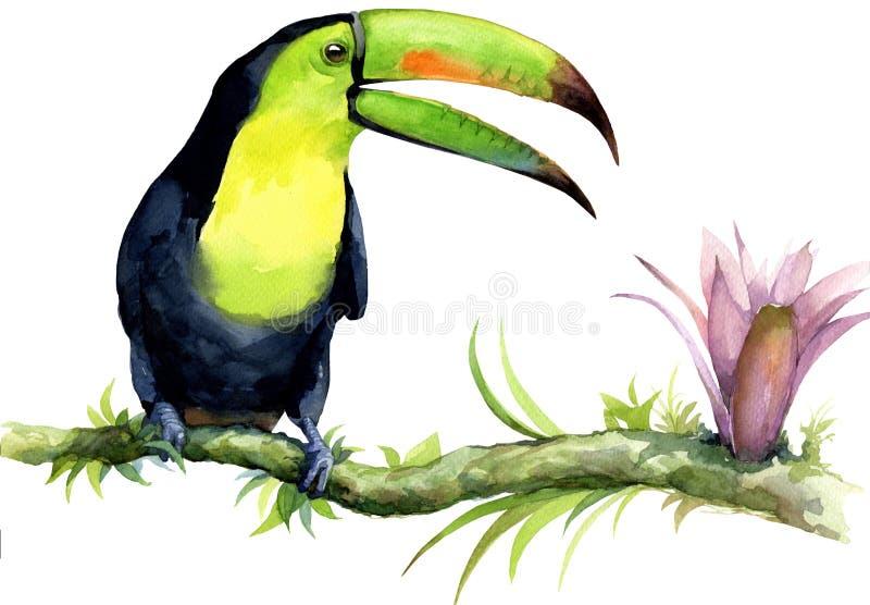 Illustration d'aquarelle de toucan sur une branche avec une fleur exotique photos stock
