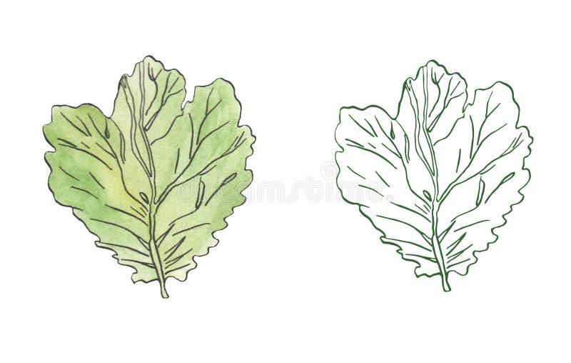 Illustration d'aquarelle des feuilles de vert avec ray? illustration stock