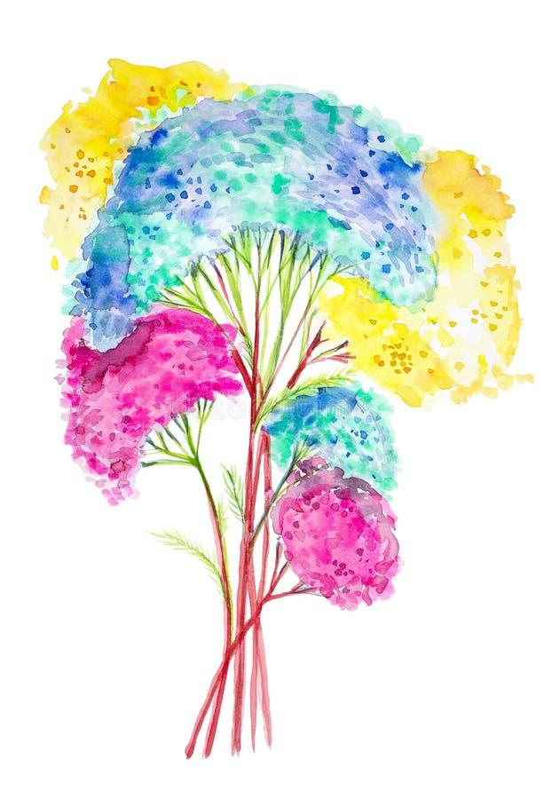 Illustration d'aquarelle des fleurs colorées de millefeuille D'isolement sur le fond blanc illustration de vecteur