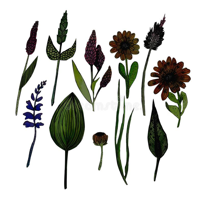 Illustration d'aquarelle des herbes illustration de vecteur