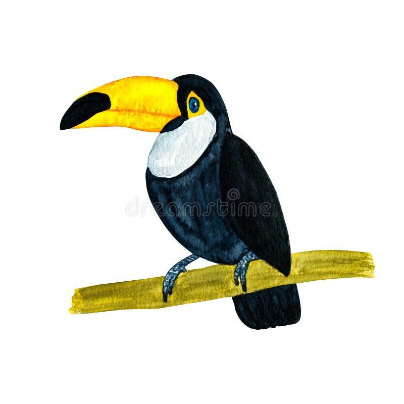 Illustration d'aquarelle du toucan tropical d'oiseau d'isolement sur le petit morceau illustration de vecteur