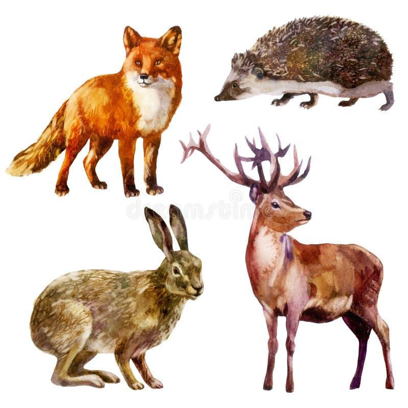 Illustration d'aquarelle, ensemble animal de for?t Lièvres, hérisson, renard et cerfs communs illustration de vecteur