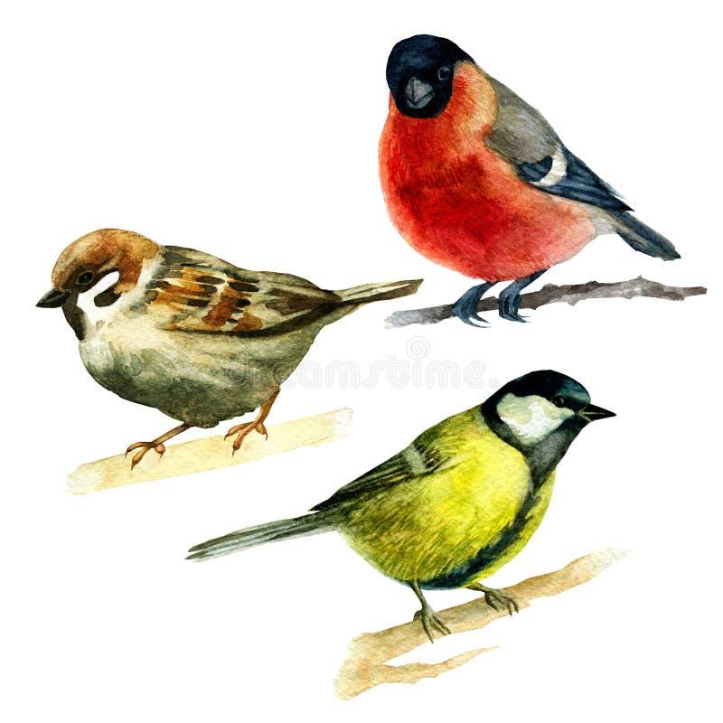Illustration d'aquarelle, ensemble Animaux de forêt, moineau, bouvreuil, oiseau bleu illustration libre de droits