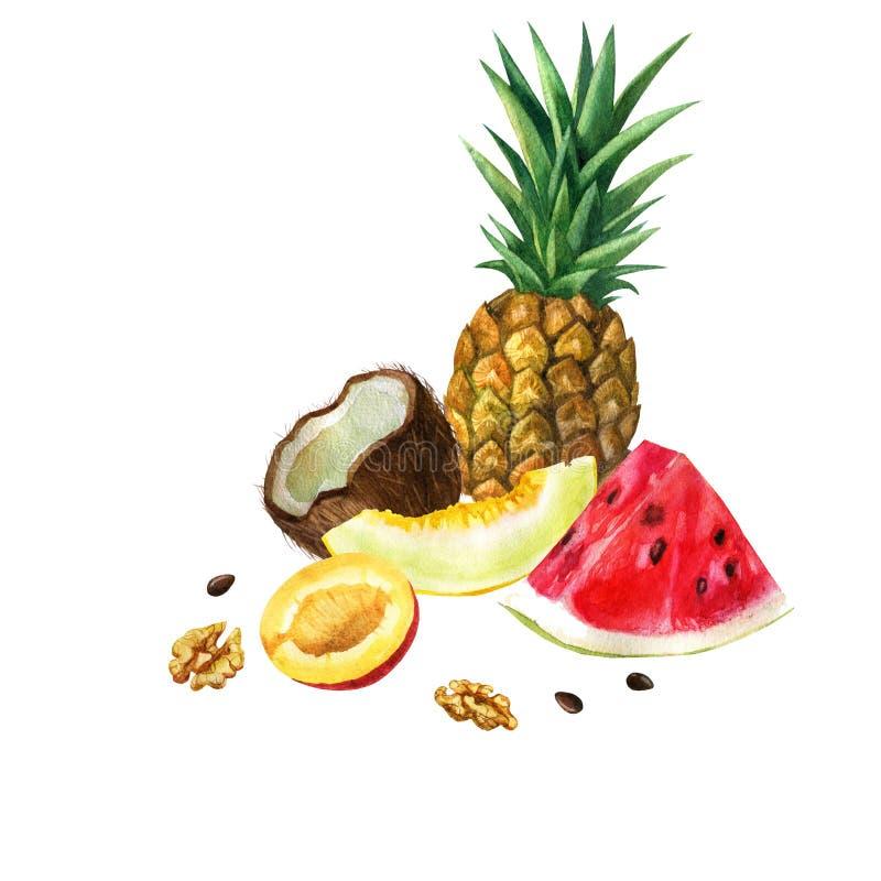 Illustration d'aquarelle Image des fruits et des écrous Pastèque, melon, ananas, noix de coco, mangue, écrous illustration libre de droits