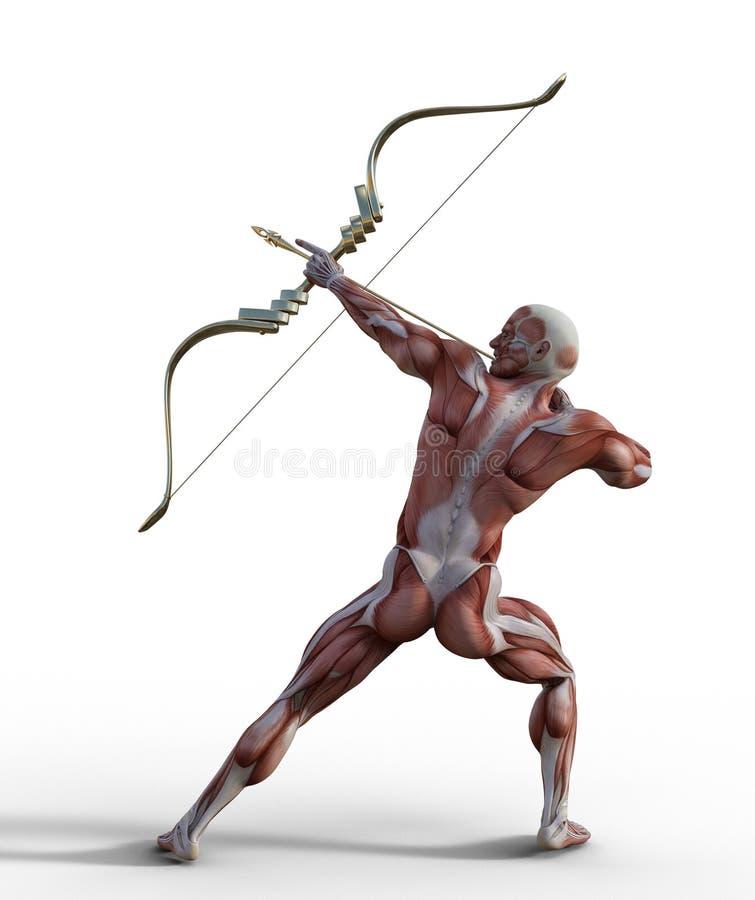 illustration 3D av det manliga muskul?sa systemet med pilb?gen och pilen vektor illustrationer
