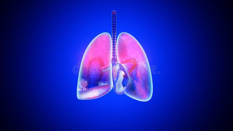 illustration 3D av inflammerade och infekterade lungor royaltyfri illustrationer