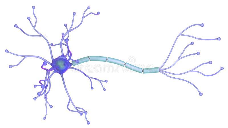 illustration 3D av neuronen royaltyfria foton