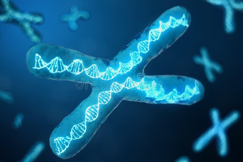 Illustration 3D X-Chromosomen mit DNA, die den genetischen Code trägt Genetikkonzept, Medizinkonzept Zukunft, genetisch stock abbildung