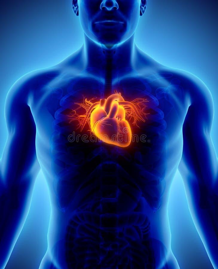 illustration 3D de coeur, concept médical illustration stock