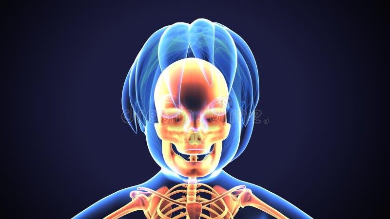illustration 3D de l'anatomie de crâne - une partie de concept médical squelettique humain illustration de vecteur