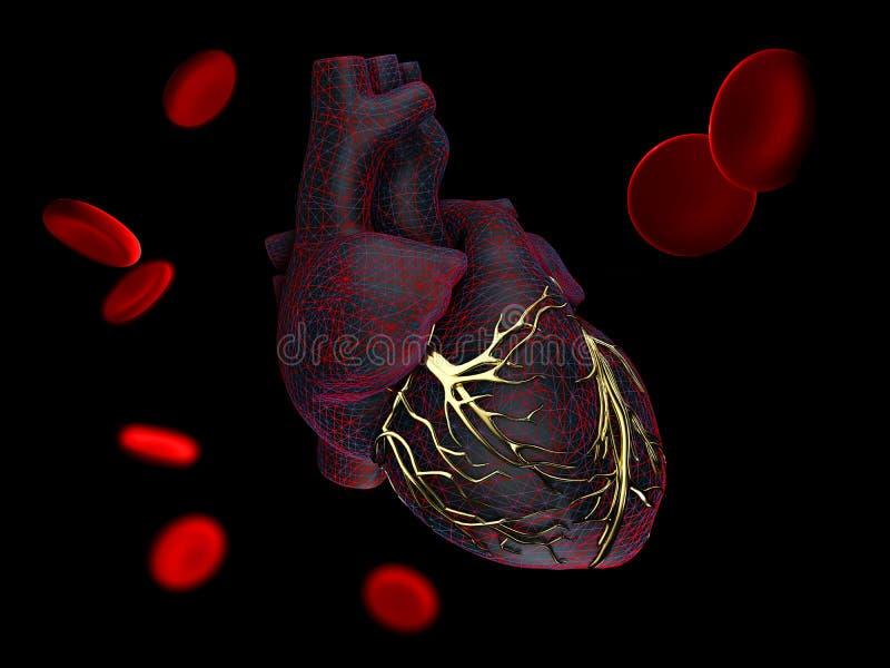 illustration 3d de l'anatomie du coeur humain avec les veines d'or d'isolement sur le noir illustration de vecteur