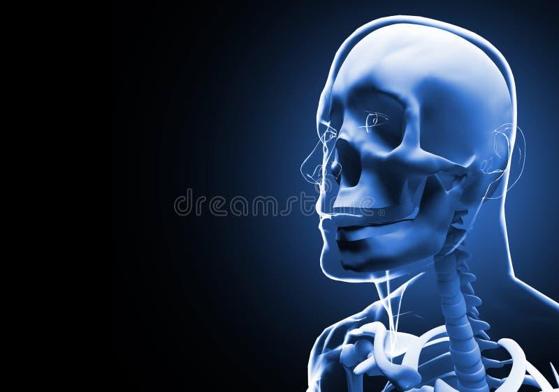 Illustration 3D des menschlichen Kopfes und des Halses des Röntgenstrahls lizenzfreie abbildung