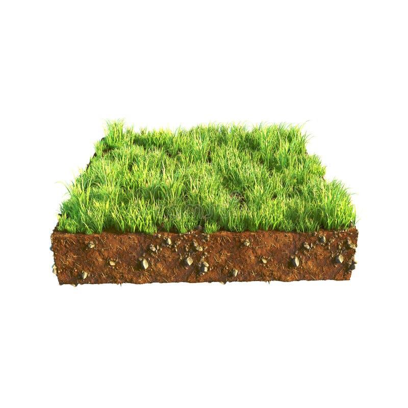 Illustration 3d des Querschnitts Bodens mit dem Gras lokalisiert auf Weiß stockbild