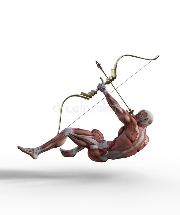illustration 3D du système musculaire masculin avec le tir à l'arc illustration de vecteur