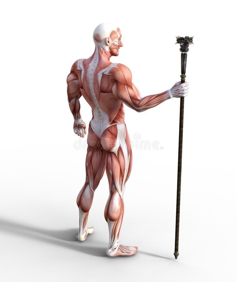 illustration 3D du système musculaire masculin tenant un personnel illustration libre de droits