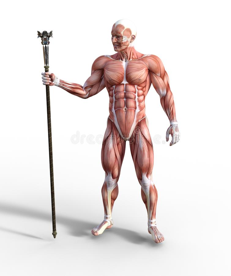 illustration 3D du syst?me musculaire masculin tenant un personnel illustration de vecteur