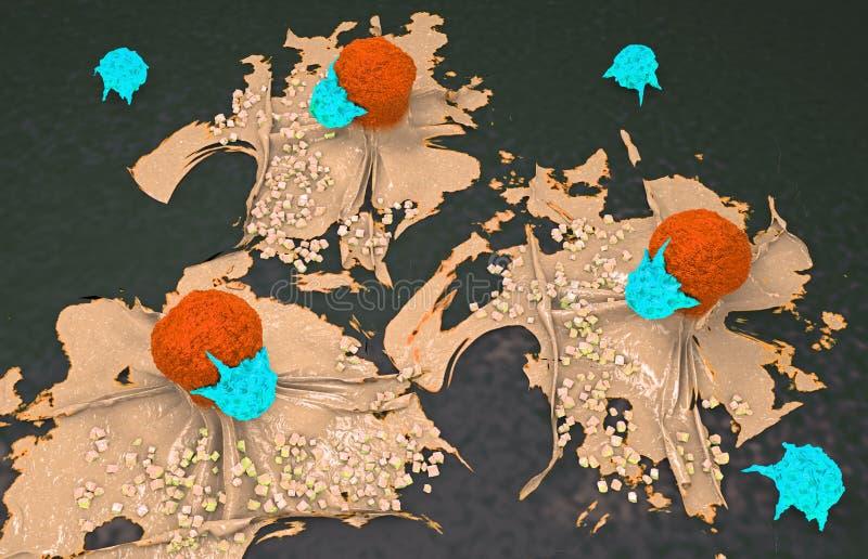 Illustration 3d einer Krebszelle in Angriff genommen und durch Lymphozyten getötet lizenzfreie abbildung