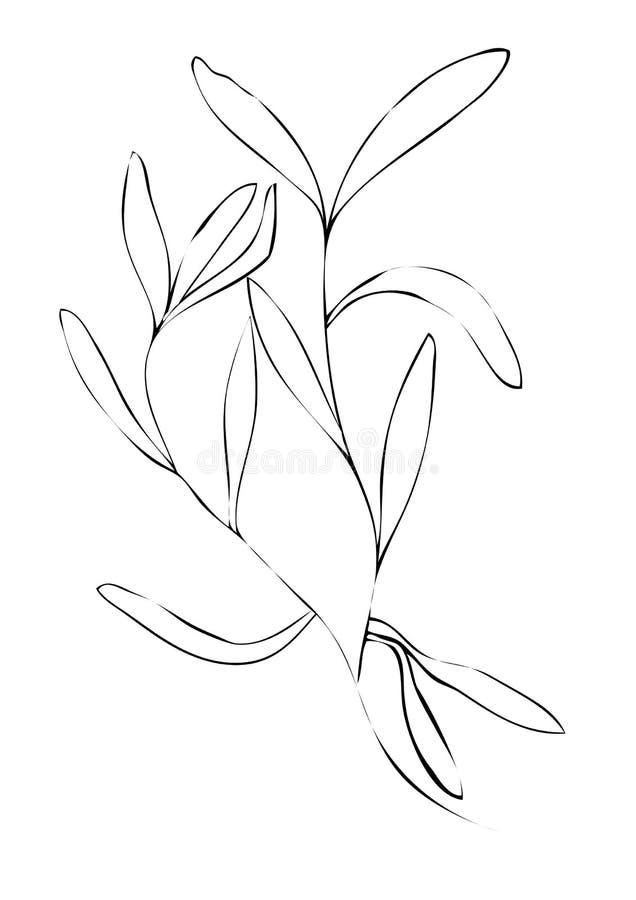 Illustration d'estragon sur le fond blanc image stock