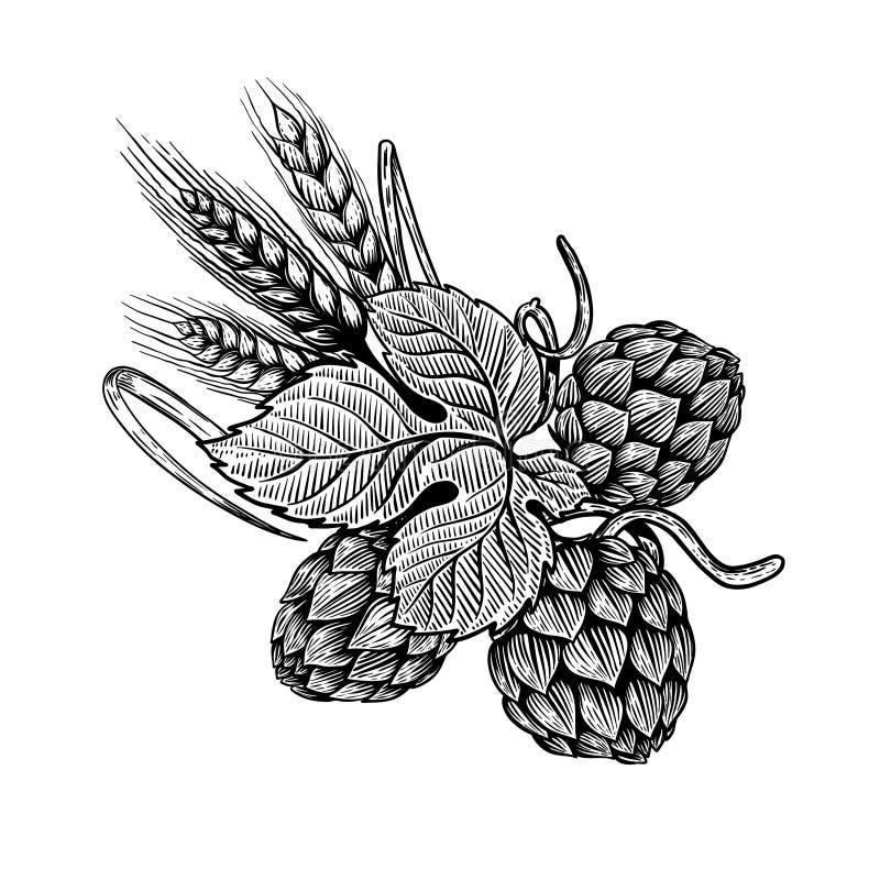 Illustration d'houblon et de blé dans le style de gravure Élément de conception pour le label de bière, affiche, emblème illustration de vecteur