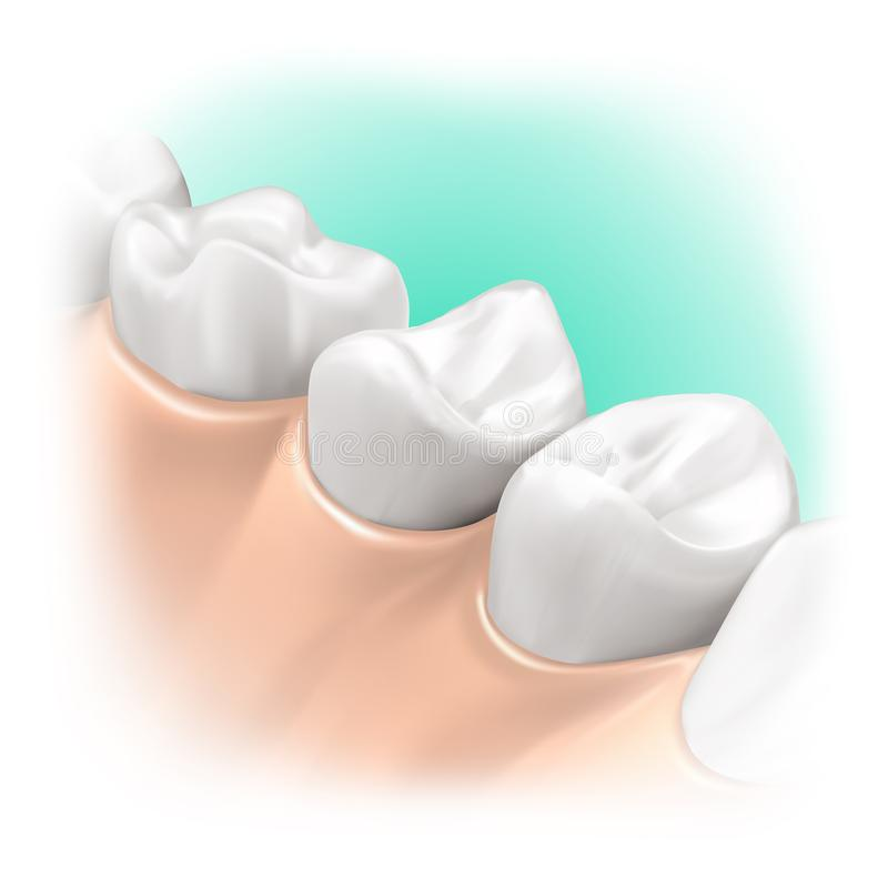Illustration 3d intra-oral vektor abbildung
