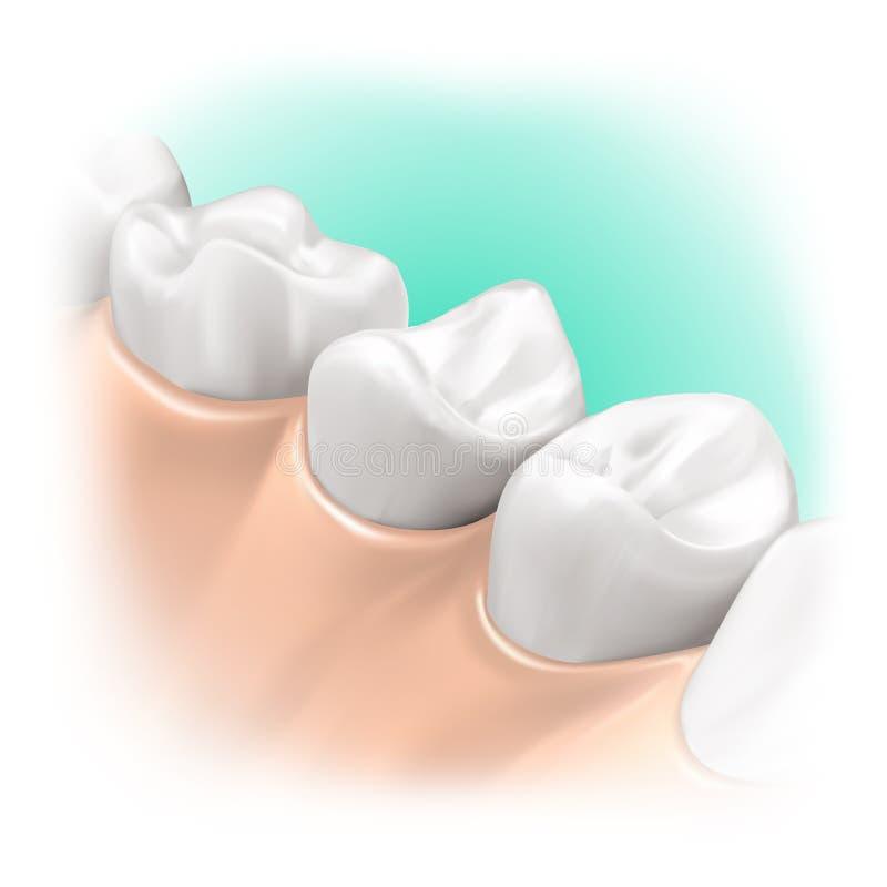 illustration 3d intraorale illustration de vecteur