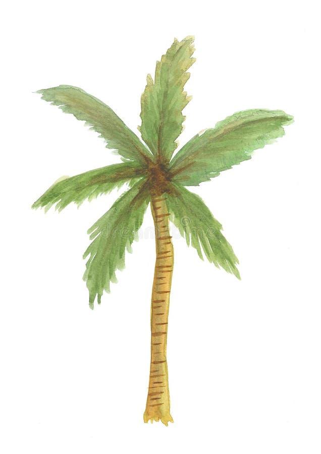 Illustration d'isolement d'aquarelle d'arbre de noix de coco, nature d'isolement illustration de vecteur