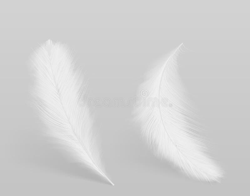 Illustration d'isolement de vecteur de plumes blanches d'oiseaux illustration stock
