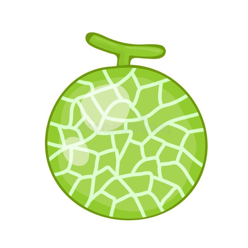Illustration d'isolement par cantaloup illustration de vecteur