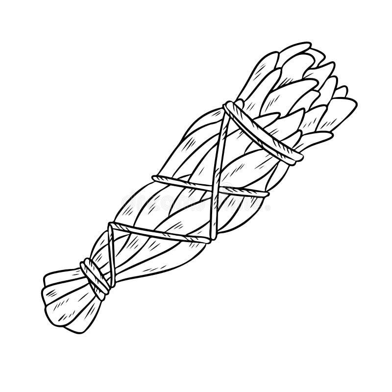 Illustration d'isolement par griffonnage tir? par la main sage de b?ton de tache Paquet sage blanc d'herbe illustration de vecteur