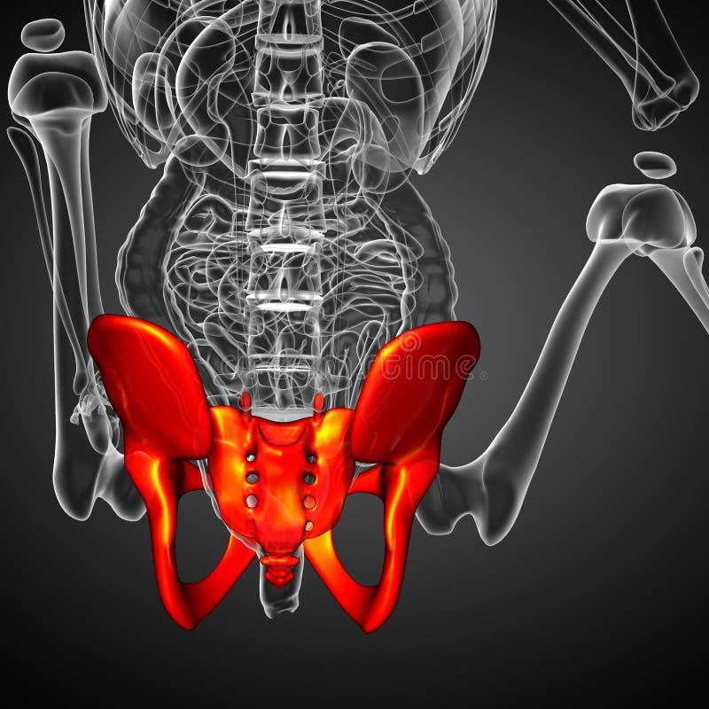 illustration 3D médicale de l'os de bassin illustration libre de droits