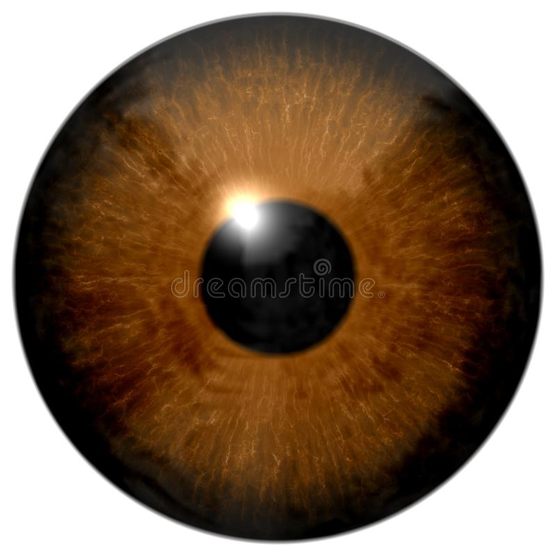 Illustration d'oeil de Brown d'isolement sur le blanc photo stock