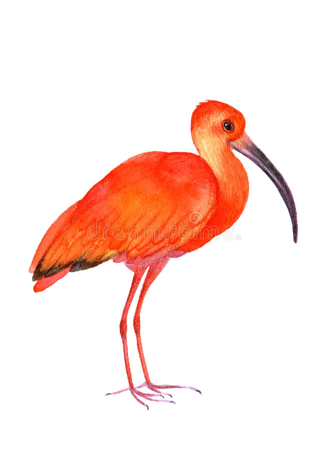 Illustration d'oiseau illustration stock