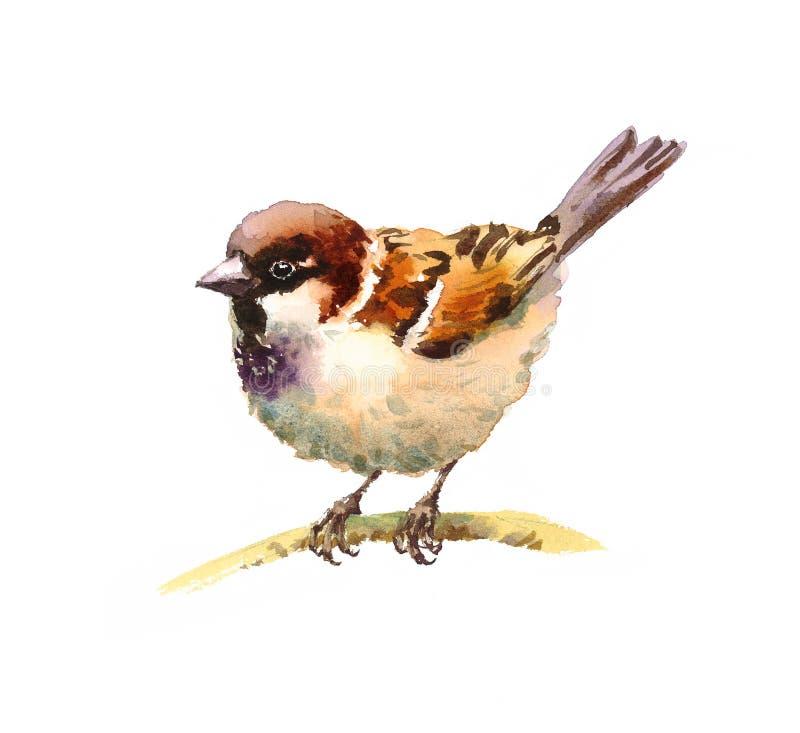 Illustration d'oiseau d'aquarelle de moineau tirée par la main illustration de vecteur