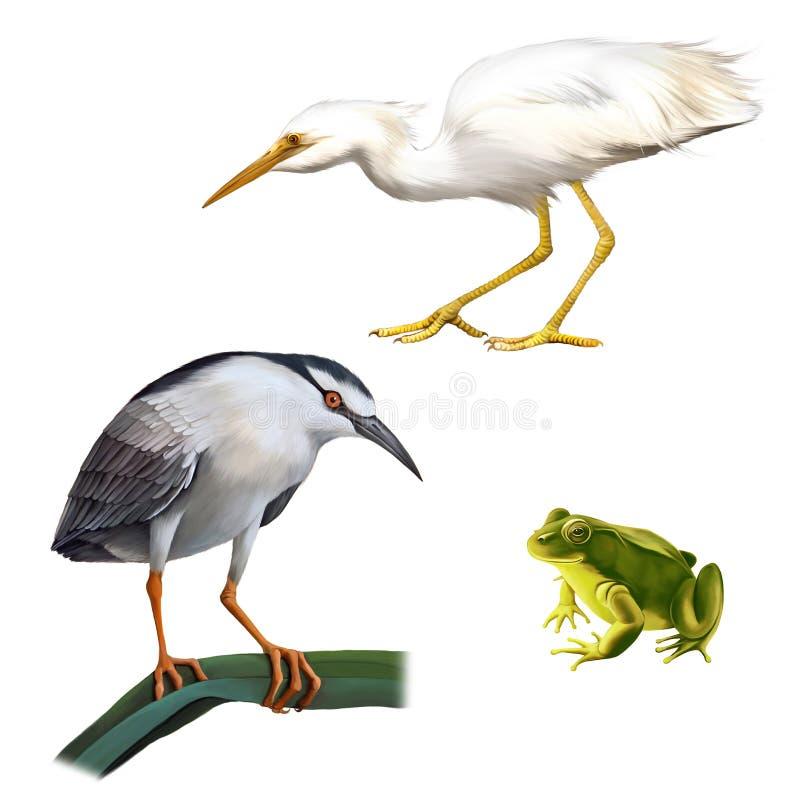 Illustration d'oiseau de héron de nuit, grand blanc illustration de vecteur